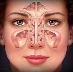 МРТ исследование пазух носа