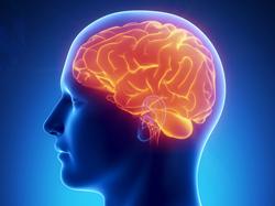 стоимость МРТ исследования головного мозга